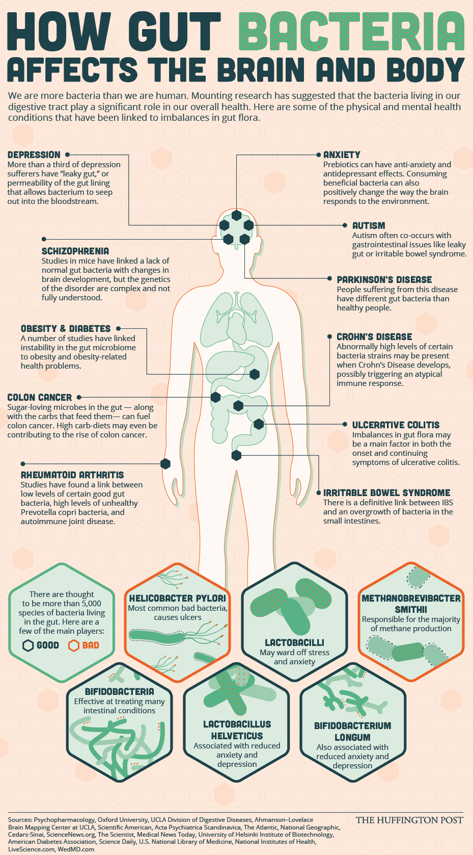 The-Numerous-Ways-That-Gut-Bacteria-Affect-Our-Physical-And-Mental-Wellbeing.